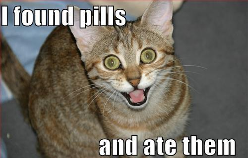 ate the pills