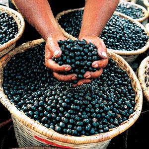 acai berry for carson city gym blog