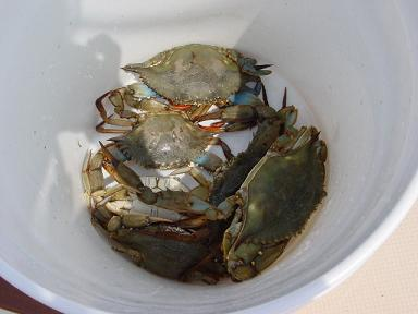 bucket of crabs for carson city personal trainer blog