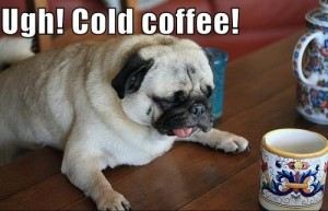 cold coffee dog