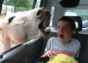 donkey_in_the_window