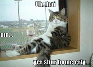 lol cat drinking wine