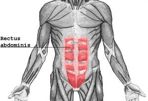 Rectus_abdominis_ab_muscles