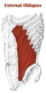 external obliques ab muscles