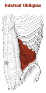 internal-obliques-ab-muscles
