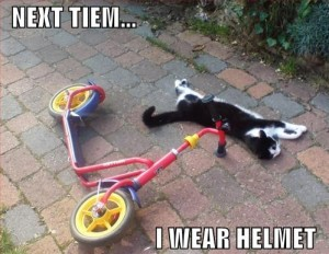 cat crash helmet